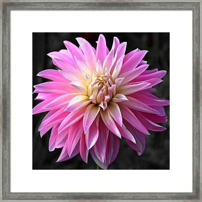 Framed Print featuring the photograph Centerfold by Matthew Ahola