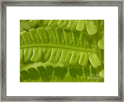Framed Print featuring the photograph Centering by Agnieszka Ledwon