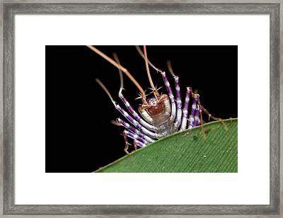 Centipede Head Framed Print