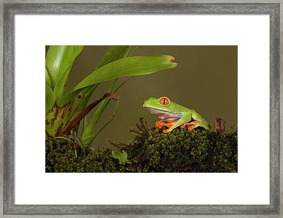 Central America, Costa Rica, Slva Verde Framed Print by Joe and Mary Ann Mcdonald