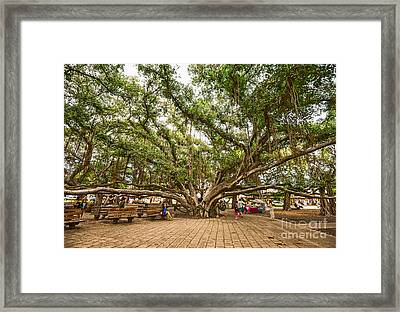 Central Court - Banyan Tree Park In Maui. Framed Print by Jamie Pham