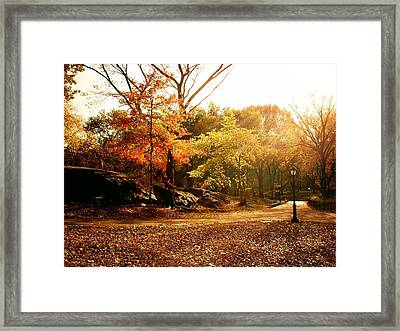 Central Park Autumn Trees In Sunlight Framed Print