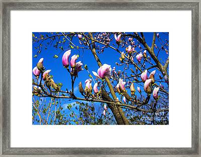 Central Park Spring Framed Print by Rafael Quirindongo