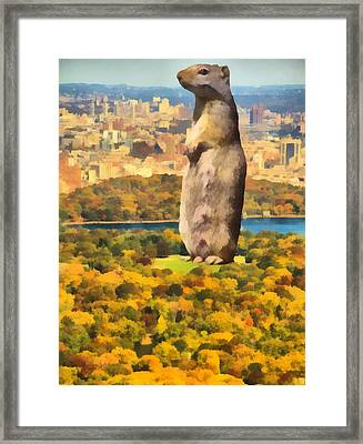 Central Park Squirrel Framed Print by Dan Sproul