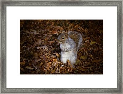 Central Park Squirrel Framed Print by Marta Grabska-Press