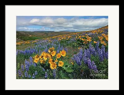 Kittitas Valley Framed Prints