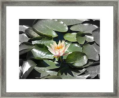 Centrestage Framed Print