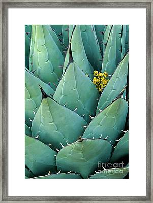 Century Plant And Tiny Blossom Framed Print by Inge Johnsson