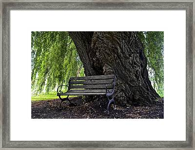 Century Tree Framed Print by Frozen in Time Fine Art Photography