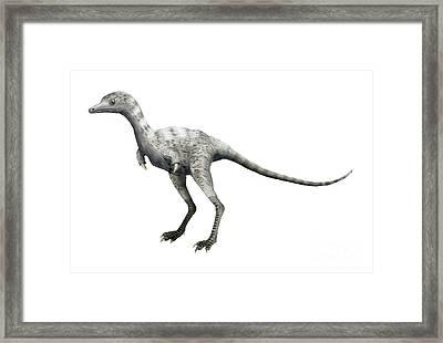 Ceratonykus Dinosaur Framed Print by Nobumichi Tamura