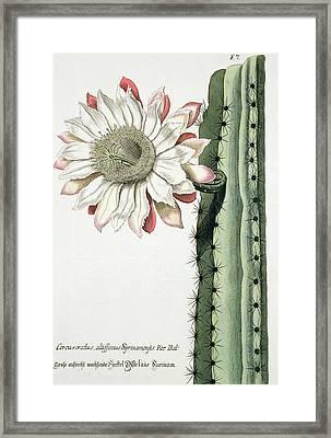 Cereus Erectus Altissimus Syrinamensis Framed Print