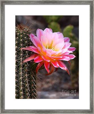 Cereus In Pink Framed Print
