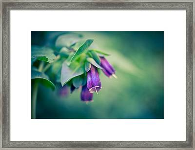 Cerinthe Abstract Framed Print by Priya Ghose