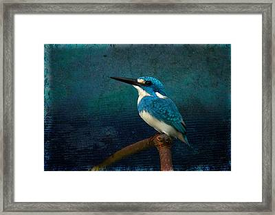 Cerulean Kingfisher Blue Alcedo Coerulescens Framed Print