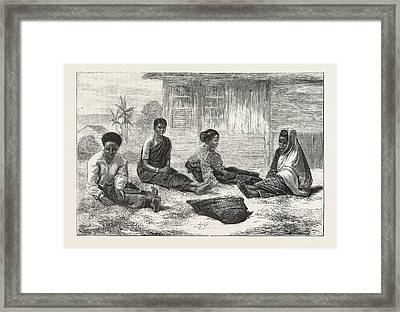 Ceylon Coffee Pickers, Sri Lanka Framed Print by Sri Lankan School