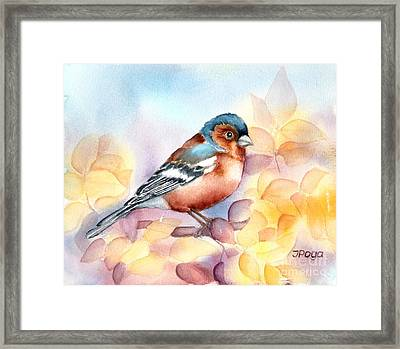 Chaffinch 3 Framed Print