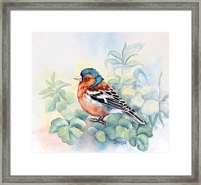Chaffinch In Grass Framed Print