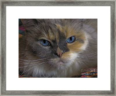 Framed Print featuring the photograph Chai by Sandi Mikuse