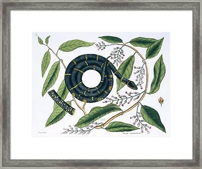 Chain Snake Framed Print