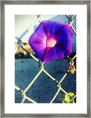 Chained Splendor Framed Print by James Aiken