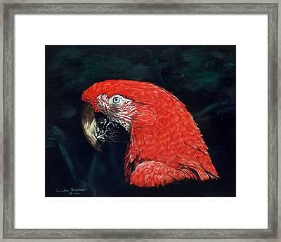 Chaka Framed Print by Linda Becker