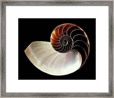 Chambered Nautilus Shell Framed Print by Gilles Mermet