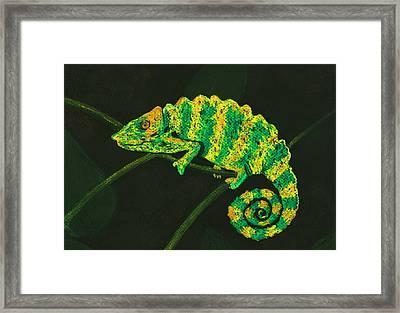 Chameleon Framed Print by Anastasiya Malakhova