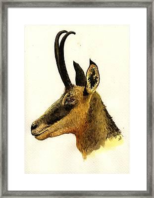 Chamois Deer Framed Print by Juan  Bosco