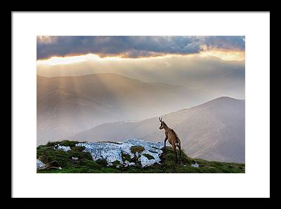 Mountain Goat Photographs Framed Prints