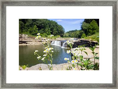 Chamomile At The Falls Framed Print by Jackie Novak