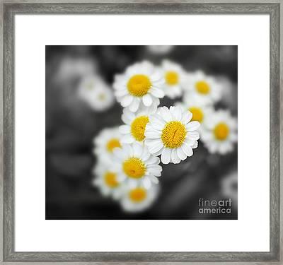 Chamomile Framed Print by Jane Rix