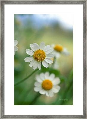 Chamomile Framed Print by Kathy Yates