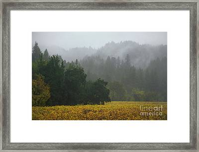 Champagne Grapes Russian River Framed Print