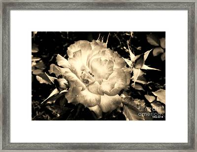 Champagne On A Stem Framed Print