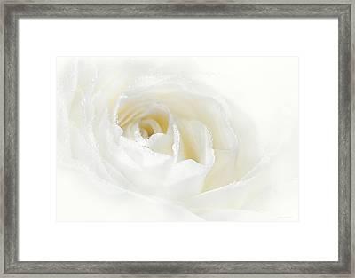 Champagne White Rose Flower  Framed Print