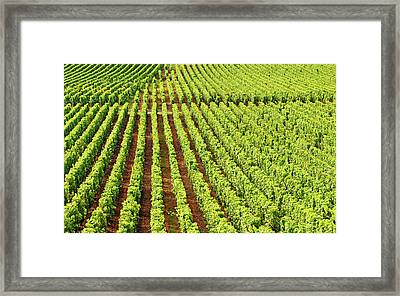 Champagne Vineyards In Cramant Framed Print by Alphotographic