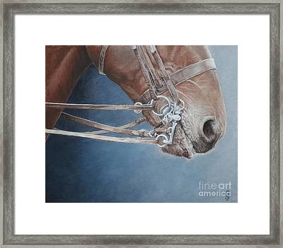Champing At The Bit. Framed Print by Pauline Sharp