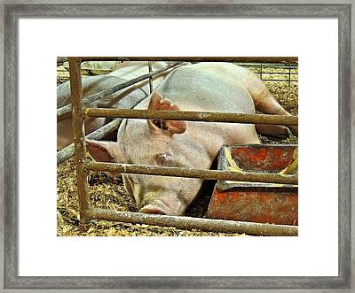 Champions Need Rest Framed Print by Laura Ragland
