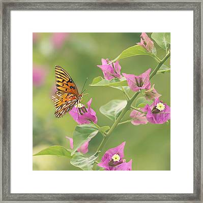 Chance Encounter Framed Print by Kim Hojnacki
