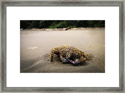 Change Of Guard Framed Print
