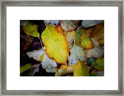 Change Of Season Framed Print by Michelle Wrighton