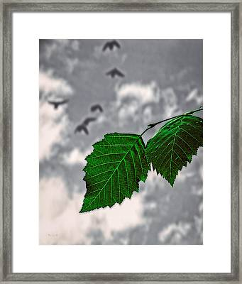 Changes Framed Print by Bob Orsillo