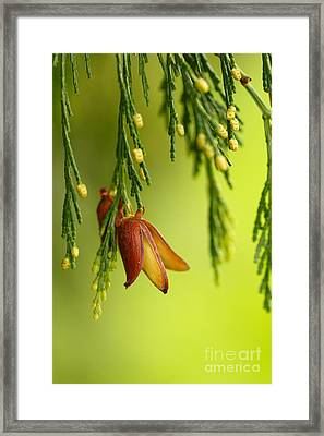 Changes Framed Print by Beve Brown-Clark Photography