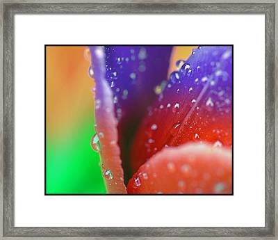 Framed Print featuring the photograph Changing Color by Robert Culver