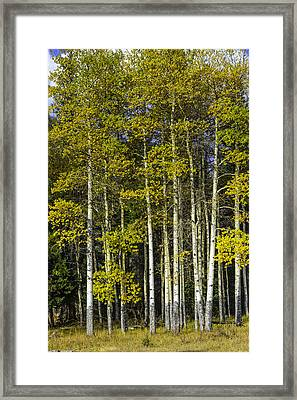 Changing Colors Framed Print by Tom Wilbert