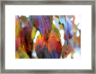 Changing Leaves Framed Print by Dorothy Hall