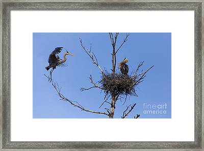 Changing Of The Guards Framed Print by Mary Lou Chmura