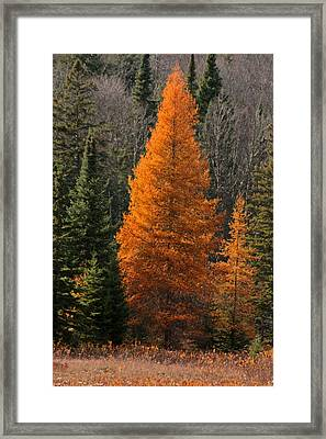Changing Of The Seasons Framed Print by Kathy  Kujala