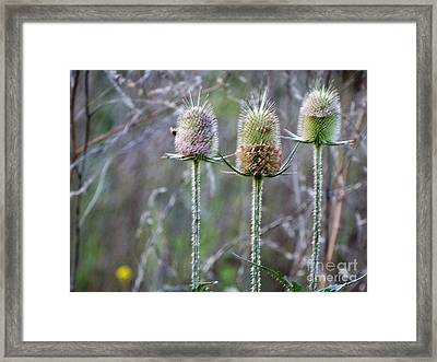 Changing Of The Seasons  Framed Print