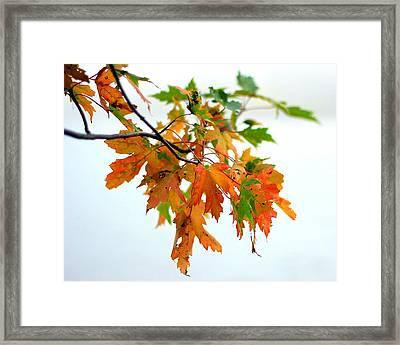 Framed Print featuring the photograph Changing Seasons by Viviana  Nadowski